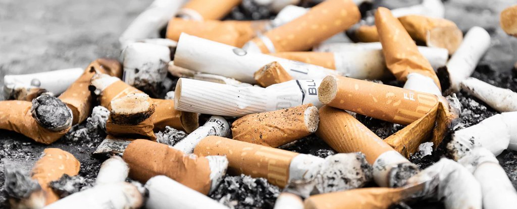 Cigarette Butts Are a Huge Trash Issue, And Now We Know They're Harming Plant Growth