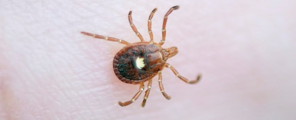 A Man Went to The Optometrist With an Irritated Eye. The Doctor Found a Tick