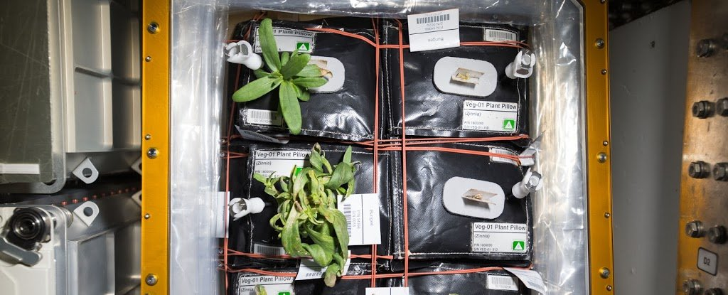 NASA Has Announced The First Fruit They'll Grow on The ISS, And It's Hot