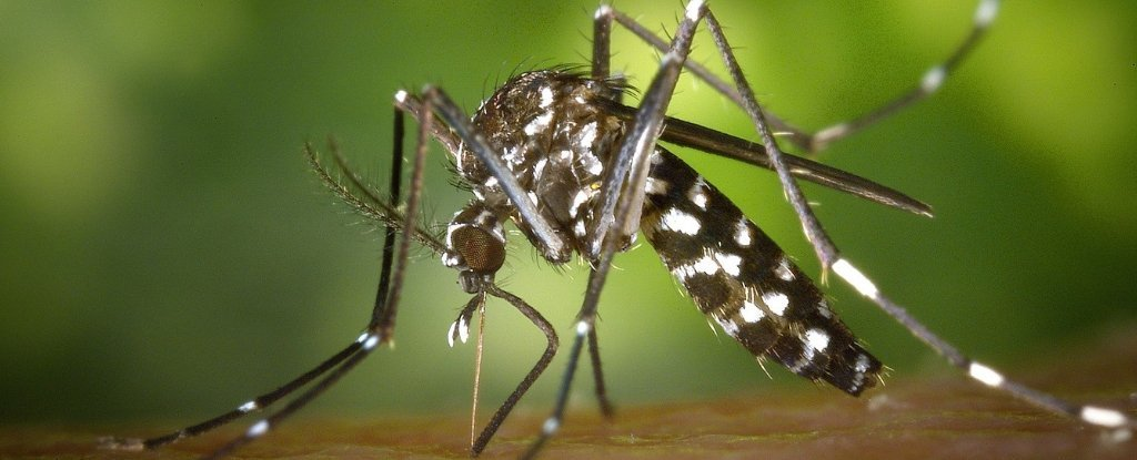 In Just 2 Years, Scientists Have Effectively Wiped Out Mosquitoes on 2 Chinese Islands
