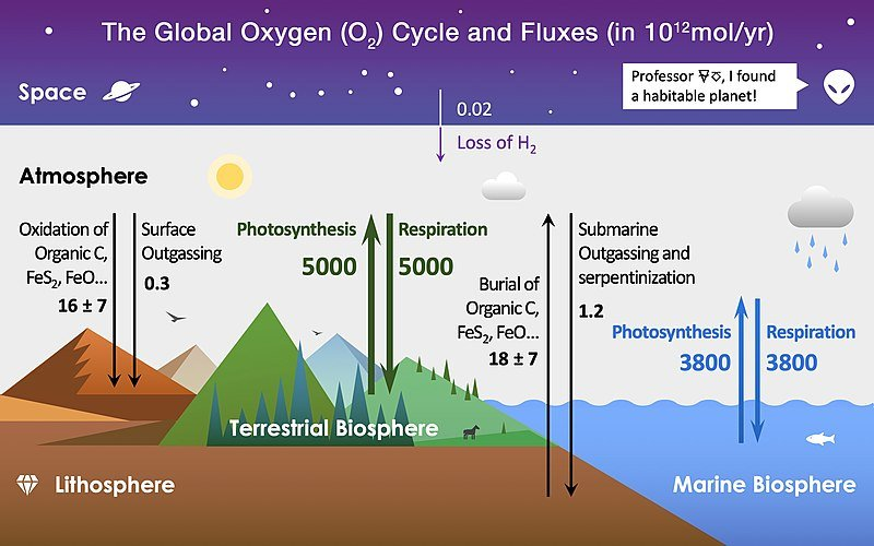 800px Global Oxygen Cycle