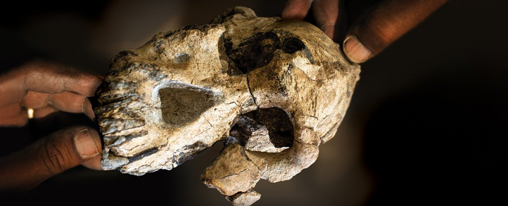 We've Finally Uncovered The Face of One of Our Most Elusive Early Human Ancestors