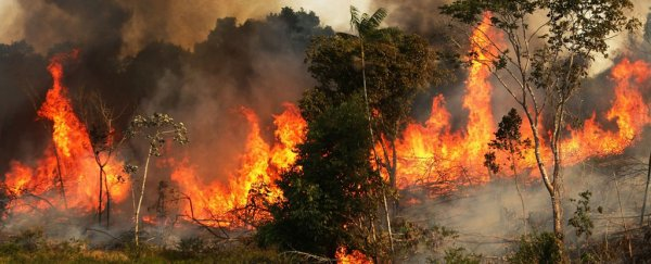 The Amazon is burning at a record rate, and the devastation can be seen from space