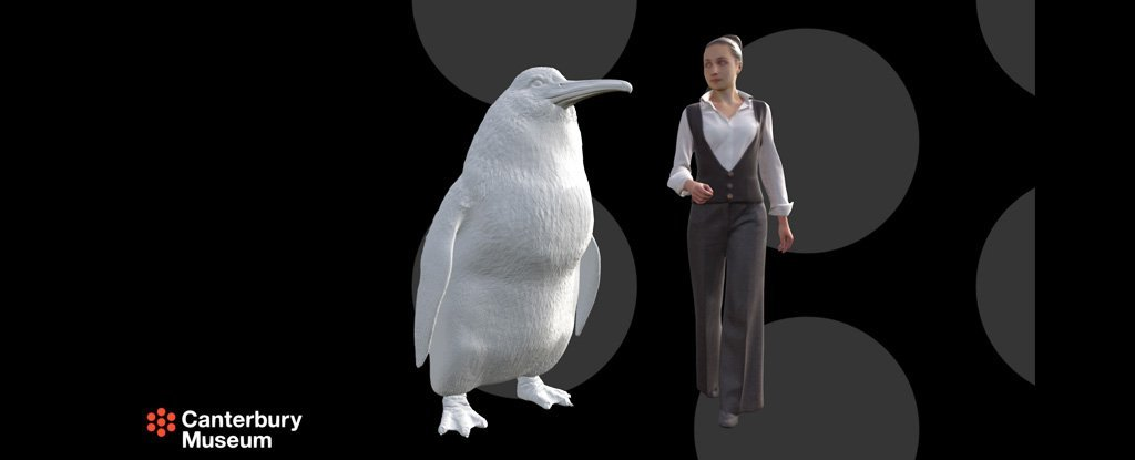 A Human-Sized Penguin Fossil Has Turned Up in New Zealand, Again