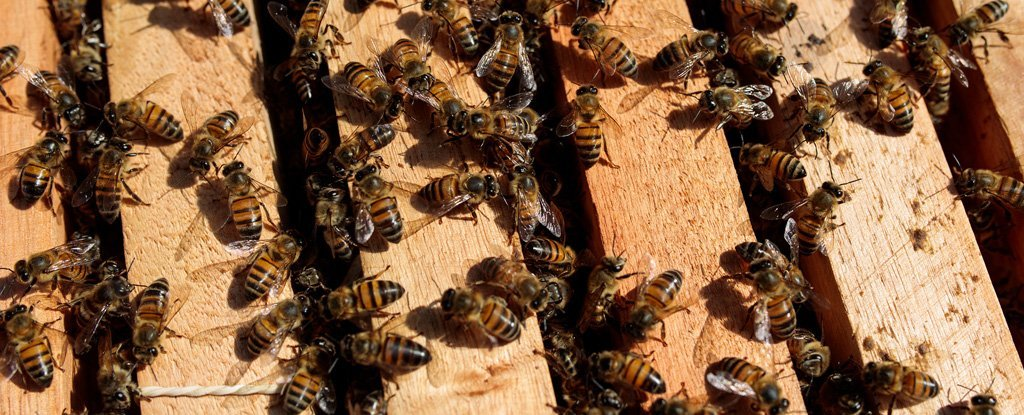Bees Are Dropping Dead Across Brazil, And The Reason Is Absolutely Devastating