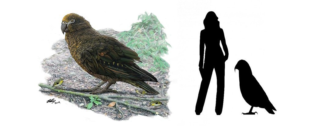 The Largest Parrot That Ever Lived Has Been Discovered in New Zealand