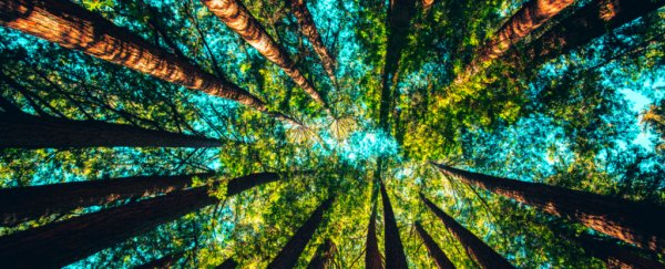 There's something you must know about trees and their role in climate change