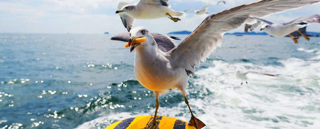 Study Finds a Scientific Method For Keeping Gulls Away From Your Fries