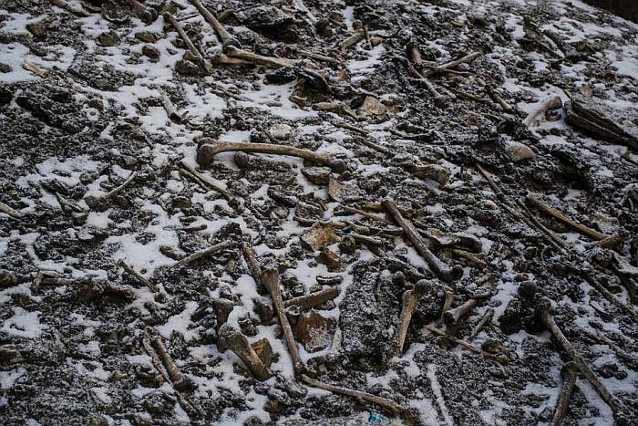 skellington bones