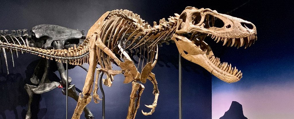 T. Rex Really Could Crush a Car in Its Jaws, Without Damaging Its Own Skull