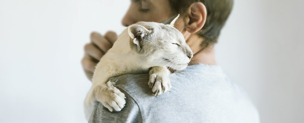 Cats Do Bond Securely to Their Humans - Maybe Even More So Than Dogs