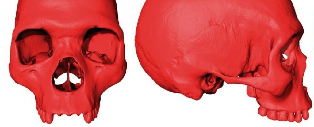 This Skull Is Not Real And Never Existed. But It Could Be Your Ancestor All The Same