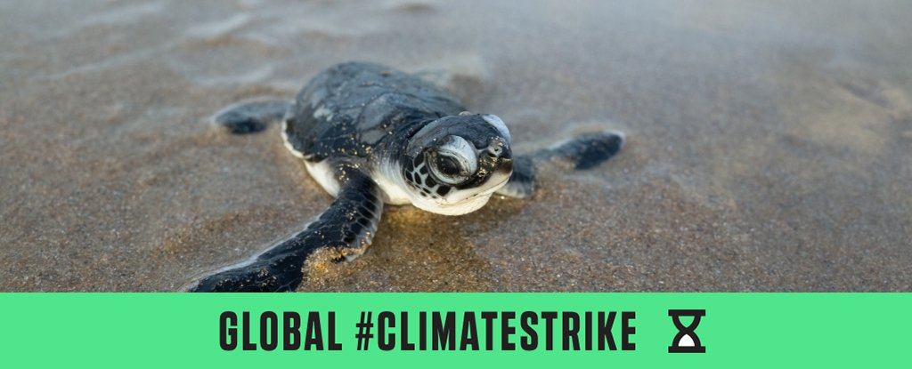 These Are The Sad Faces of Animals Already Impacted by The Climate Crisis