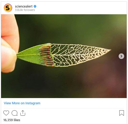 science insta image 11