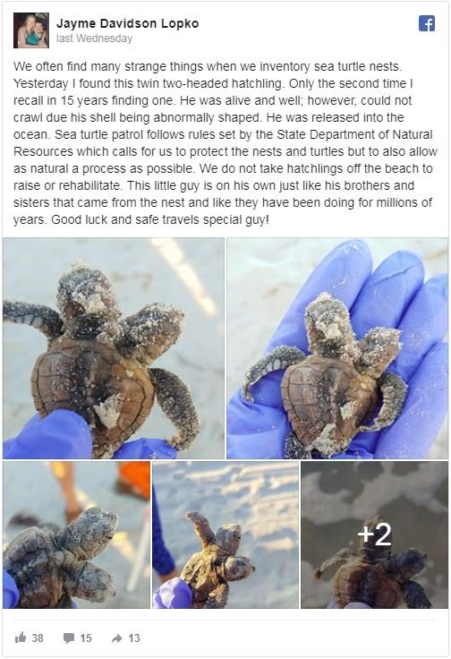 two headed baby turtle facebook post
