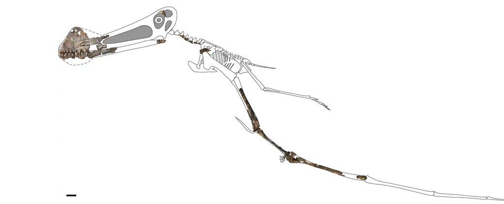 PterosaurFossilAus4m 1024