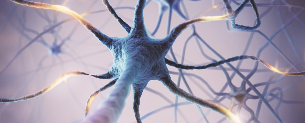 'Excessive' Brain Activity Has Been Linked to a Shorter Life