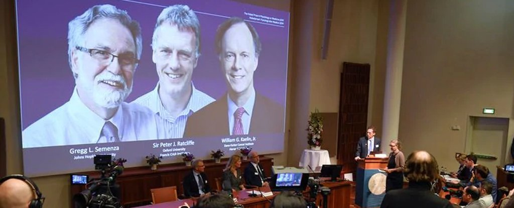 Nobel Prize in Medicine Won For Profound Discovery of How Cells Sense Oxygen