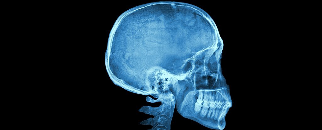 The Golden Ratio Has Been Found in The Human Skull, But What Does It Mean?
