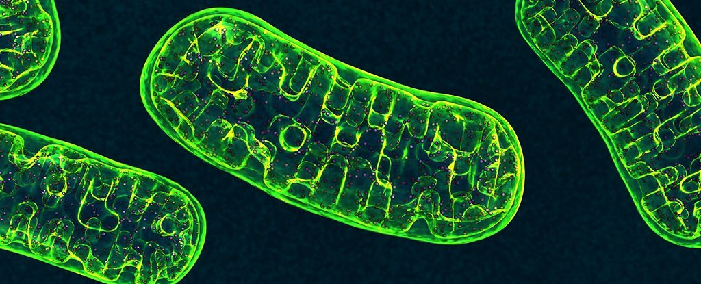 Study Casts Doubt on One of Our Key Assumptions About The 'Powerhouse of The Cell'