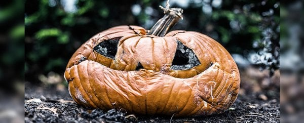 Image result for halloween landfill""