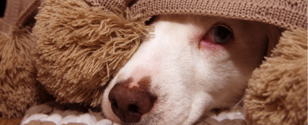 Heart-Wrenching Study Shows Why You Really Shouldn't Yell at Your Dog