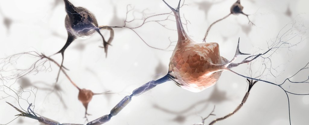 Individual Neurons Target Specific Memories When We Remember, Study Shows