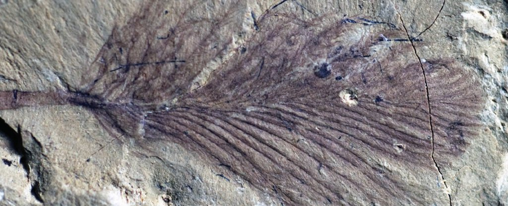 Gorgeous Collection of Fossil Feathers Reveals How Dinosaurs Kept Warm in Ancient Gondwana - ScienceAlert image