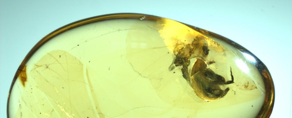 Stunning Amber Discovery Just Pushed Evidence of Pollination Back 50 Million Years