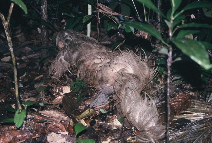 soggy sloth