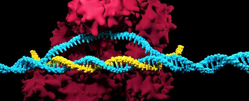 crispr mutations copy web
