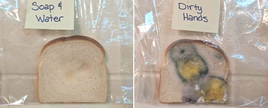 This Simple Bread Experiment Is A Genius Way To Get Kids To Wash Their Hands