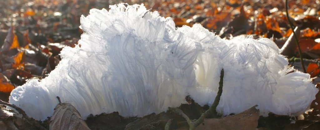 Ever Heard of 'Hair Ice'? It's Totally a Thing
