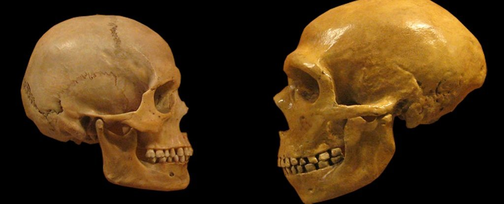 Experimental Evidence Shows How Humans Could Have Domesticated Ourselves