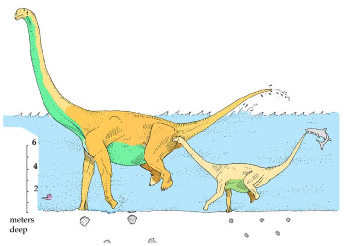 010 sauropods 2