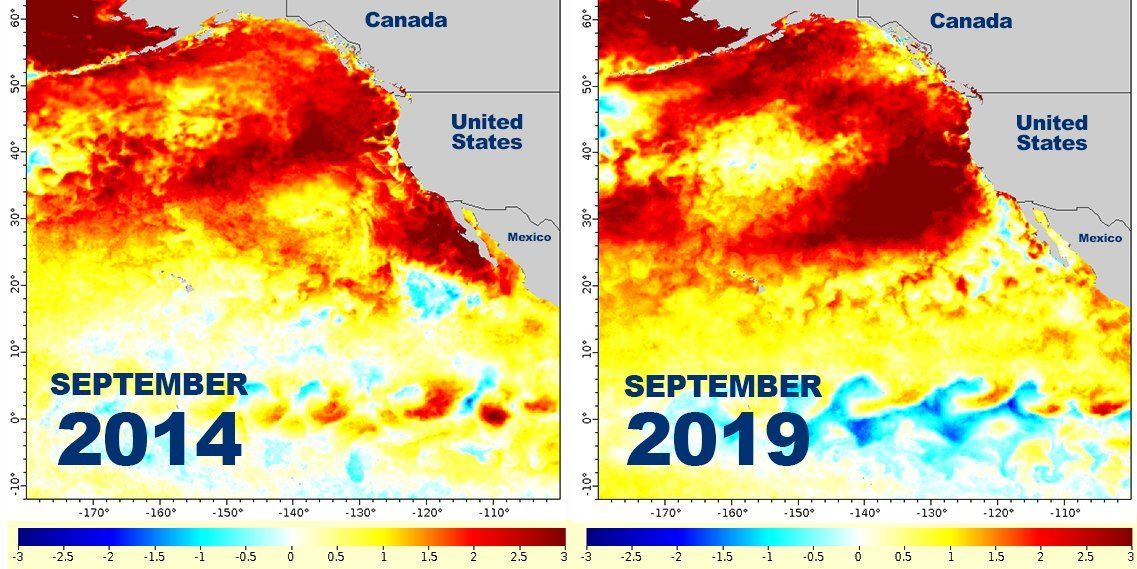 Comparison of sea-surface-temperature anomalies for 2014, when 'The Blob' emerged, and 2019. (NOAA Fisheries)