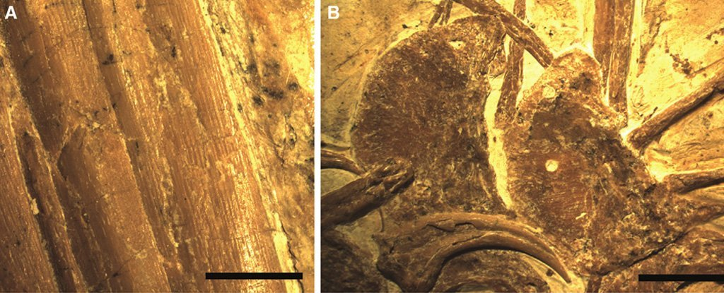 Incredible Dinosaur Fossil Reveals How Their Feathers Compared to Modern Birds