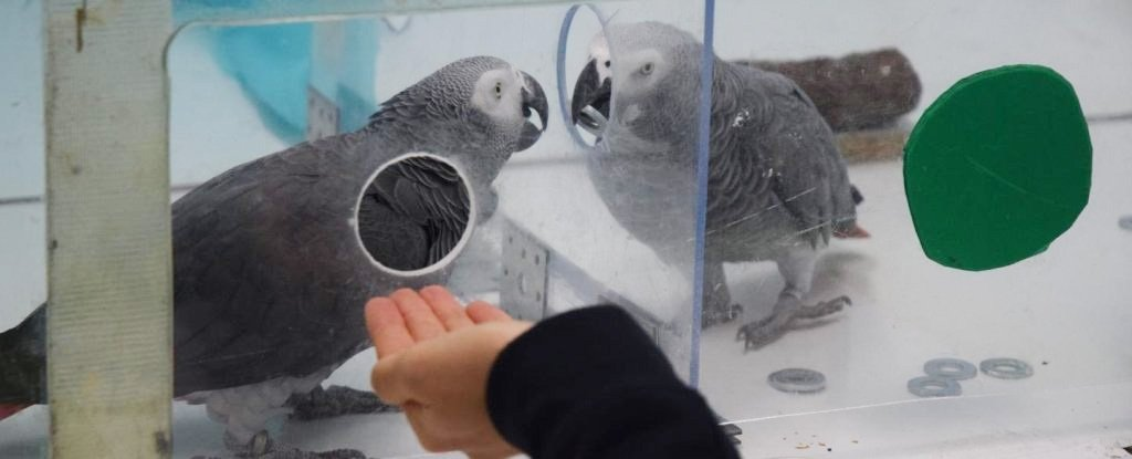 These Parrots Show Kindness to Each Other Without Any Benefit to Themselves