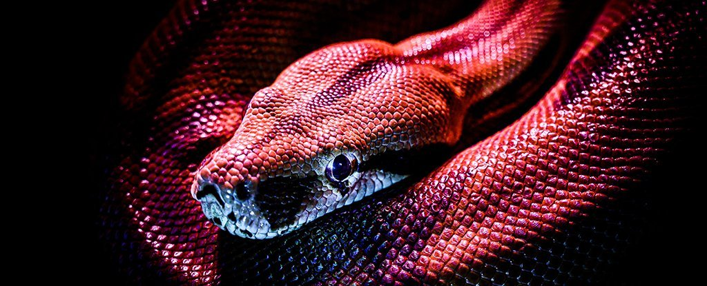 Scientists Have Grown Snake Venom Glands in The Lab. Here's Why That's Awesome