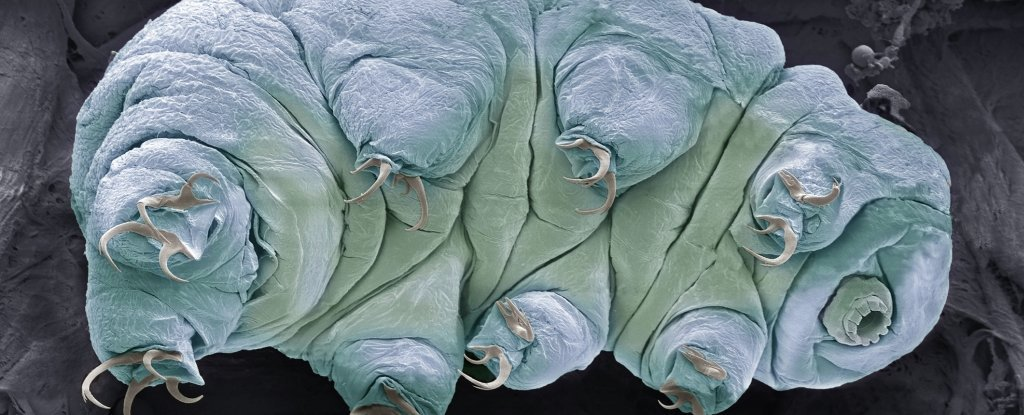 Tardigrades Are Basically Indestructible, But Scientists Just Found Their Weak Point
