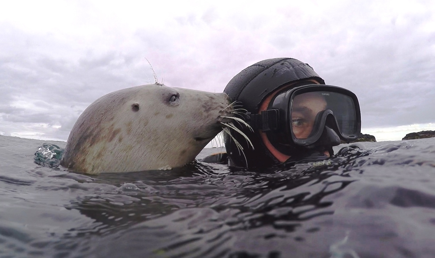 Ben Burville with a wild grey seal. (Ben Burville)