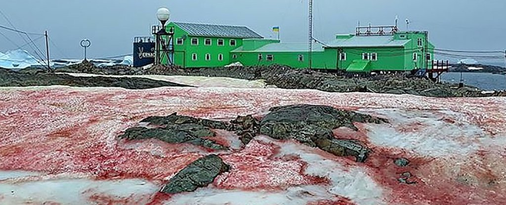 Astounding Images of Antarctica's Strange Blood-Red Ice Are Really an Ominous Climate Sign