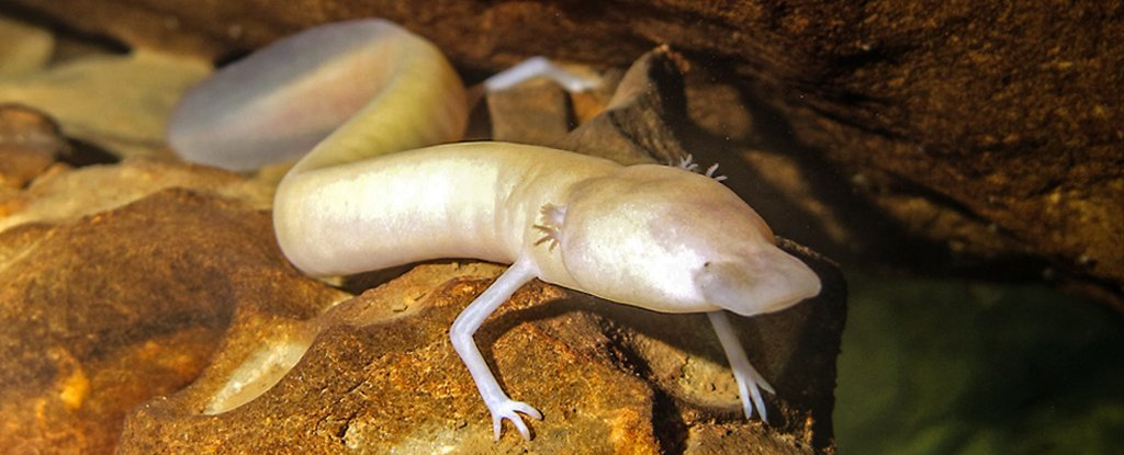 Scientists Find a Wild Salamander That Hasn't Moved From Its Spot For 7 Years