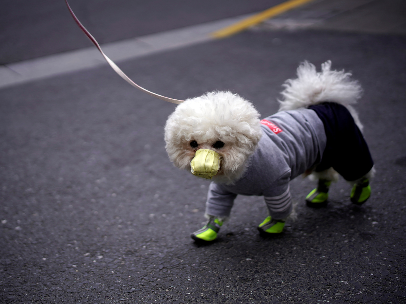 A dog in Shanghai on March 2. (Aly Song/REUTERS)