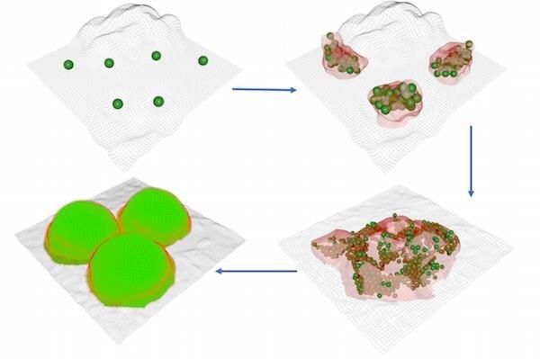 forma de bacteria