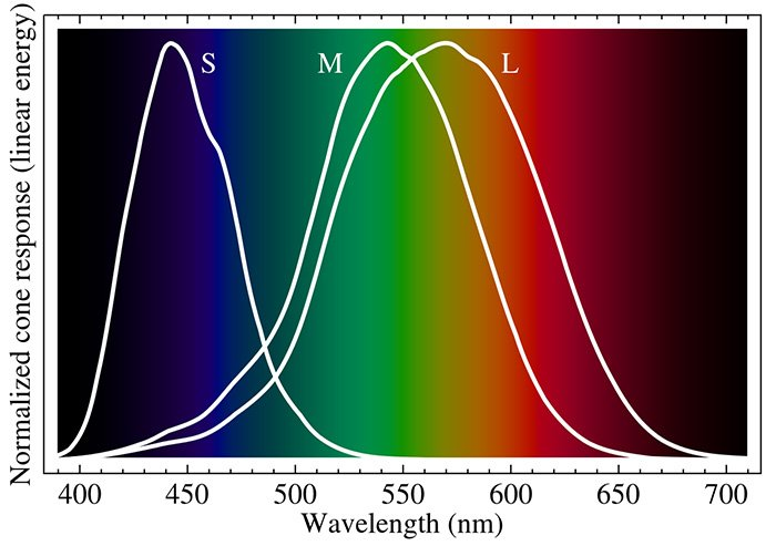 eye cell response to light spectrum