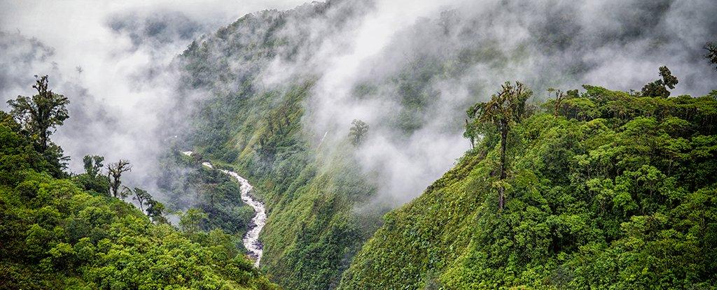 La diversidad de los sumideros de carbono de los bosques tropicales es más complicada de lo que pensábamos 1
