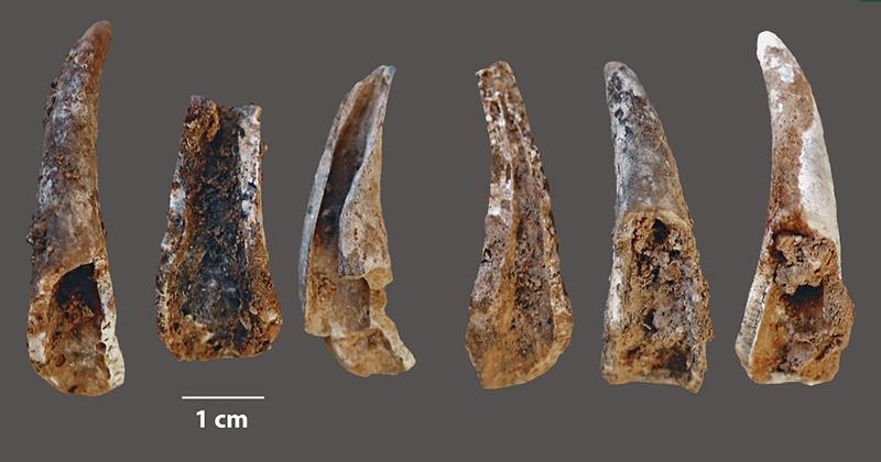 seafood neander 3