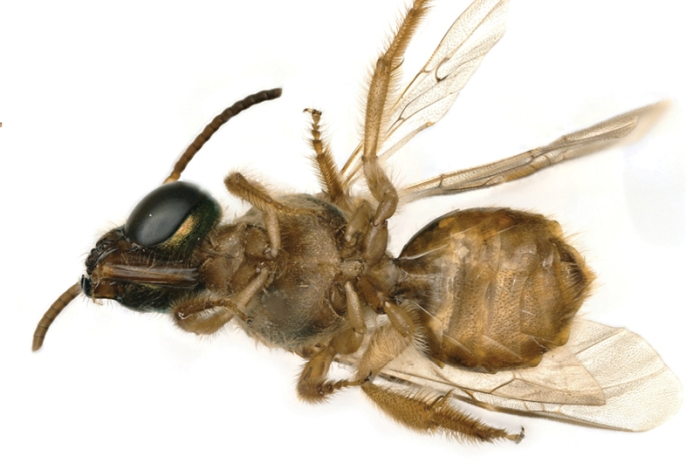 bee legs