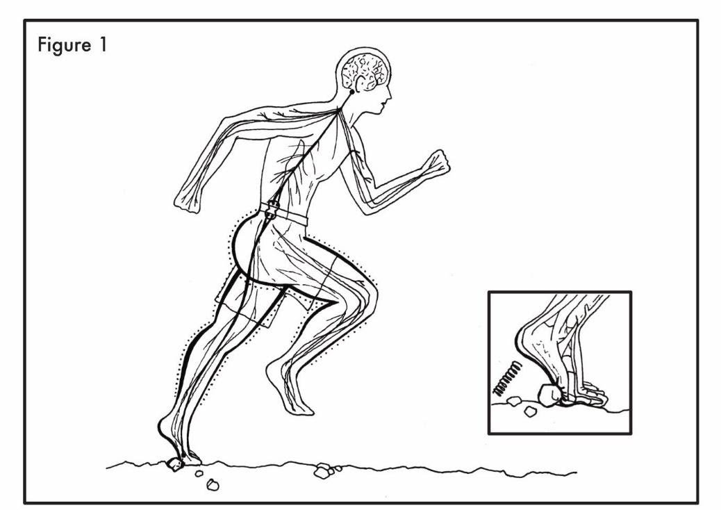 Proper barefoot running form. (Peter Francis)